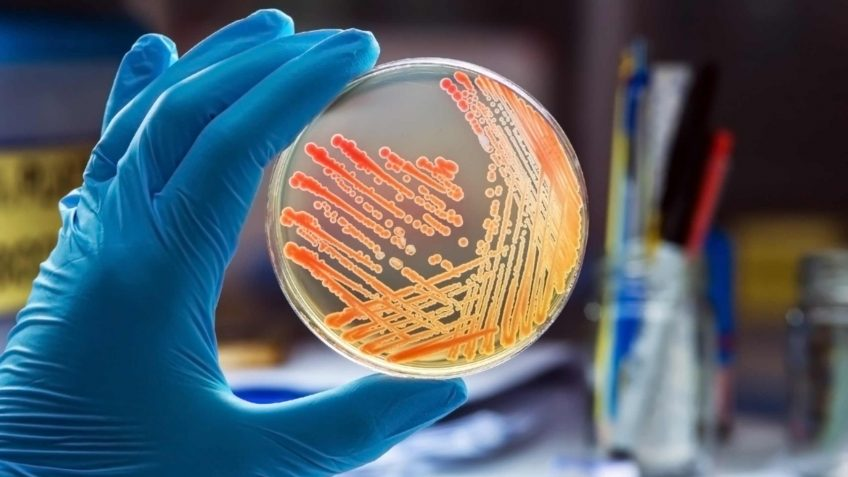 Microbiology Services Image